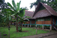 Tambo Jungle Lodge Tambopata with llama online tour peru SRL